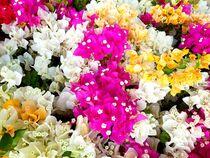 Summer Flowers IV von Juergen Seidt