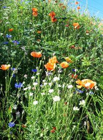 Summer Flowers VI von Juergen Seidt