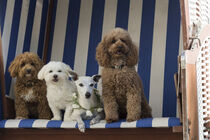 Nordsee Urlaub mit Hunden von Heidi Bollich