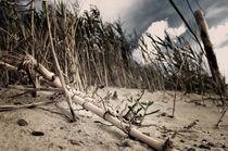 Dünen am Nordseestrand