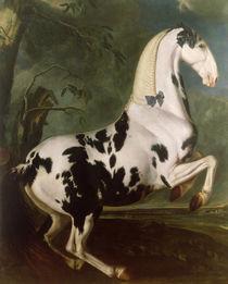 The Piebald Stallion at the Eisgruber Stud  von Johann Georg Hamilton