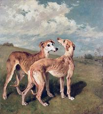 Greyhounds  von John Emms