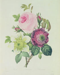 Rose by Pierre Joseph Redoute