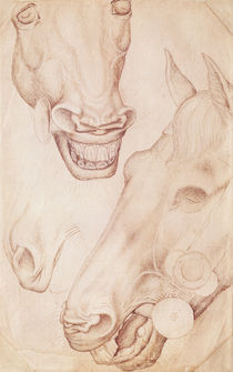 Heads of Horses von Antonio Pisanello