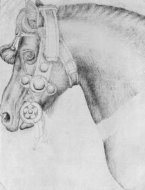 Head of a horse von Antonio Pisanello