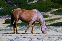 Horse by Jose María Palomo de la Fuente