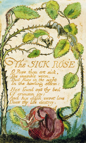 william blake the sick rose essay The sick rose: poem analysis o rose, thou art sick like in many of blake's poems, an exclamation mark in used where he comments on an issue that seems obviously atrocious to him, but the rest of the world is seemingly oblivious to it as they do nothing to.