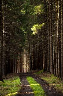Waldweg von Markus Hartmann