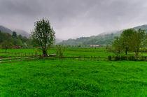 A green landscape by Jose María Palomo de la Fuente