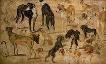 Study of Hounds by Jan Brueghel the Elder