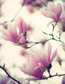Spring awakening by Sarah C. Frerich