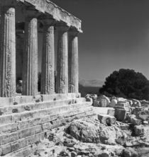 Temple of Aphaea  by Greek