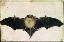 Bat by Albrecht Dürer