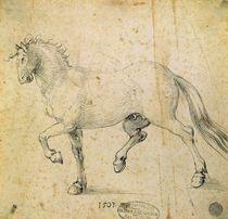 Horse by Albrecht Dürer