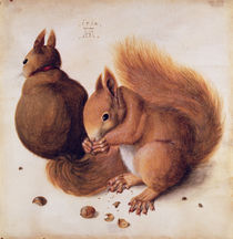 Squirrels by Albrecht Dürer