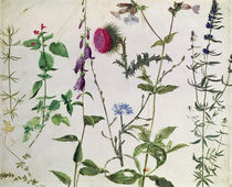 Eight Studies of Wild Flowers  by Albrecht Dürer