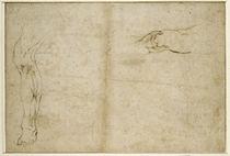Study of a human leg  by Michelangelo Buonarroti