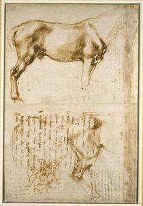 Anatomic Horse study by Michelangelo Buonarroti