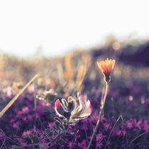 Heide by Eva Stadler