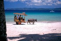 Buffalo Beach, Palawan