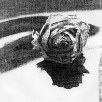 9-film-rose