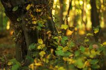 Herbstwald by Christian Stein