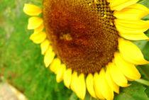 Sun In The Green by Senna an