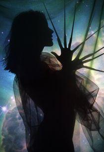 Cosmoses by Elena Kulikova