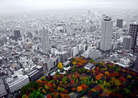 Shinjukushine