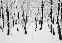 Winterwald II by David Pinzer