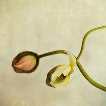 Curios by Priska  Wettstein