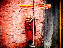 Novice Monk by Will Berridge