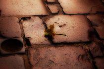 golden leaf von Zuzanna Nasidlak
