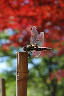 dragonfly von Zuzanna Nasidlak