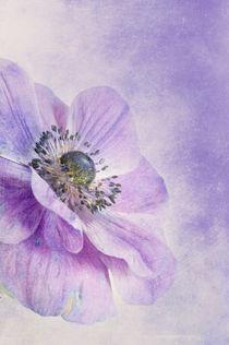 Lilac von Priska  Wettstein