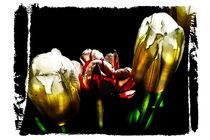 Tulpen_1 von Guido-Roberto Battistella