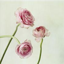 'Copains' von Priska  Wettstein