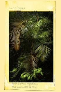 Dschungelfarn von Guido-Roberto Battistella