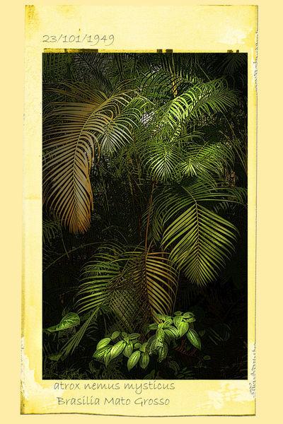 Dschungelfarn
