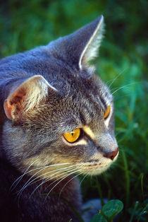 Cat von Benny Pettersson