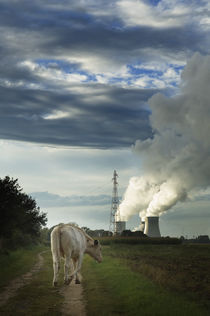 Nuclear Cow by Tom Hanslien