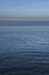 Swimming in the Ocean, Greystones, Ireland. by Tom Hanslien