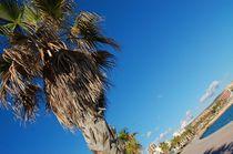 palm von Zuzanna Nasidlak