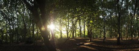 Hapstead-heath-panorama-01