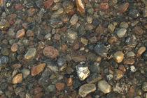 Steine im Wasser von Max Nemo Mertens
