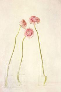 Renoncules by Priska  Wettstein