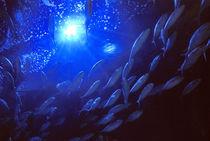Mediterranean Blue fin Tuna  by Tamàs Ibiza
