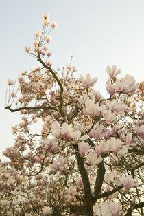 Blumen-unb-1485