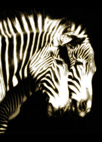 Zebra by Guido-Roberto Battistella