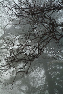 Tree branches emerging from fog.